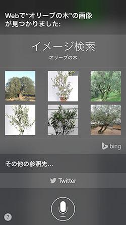 Siri olive